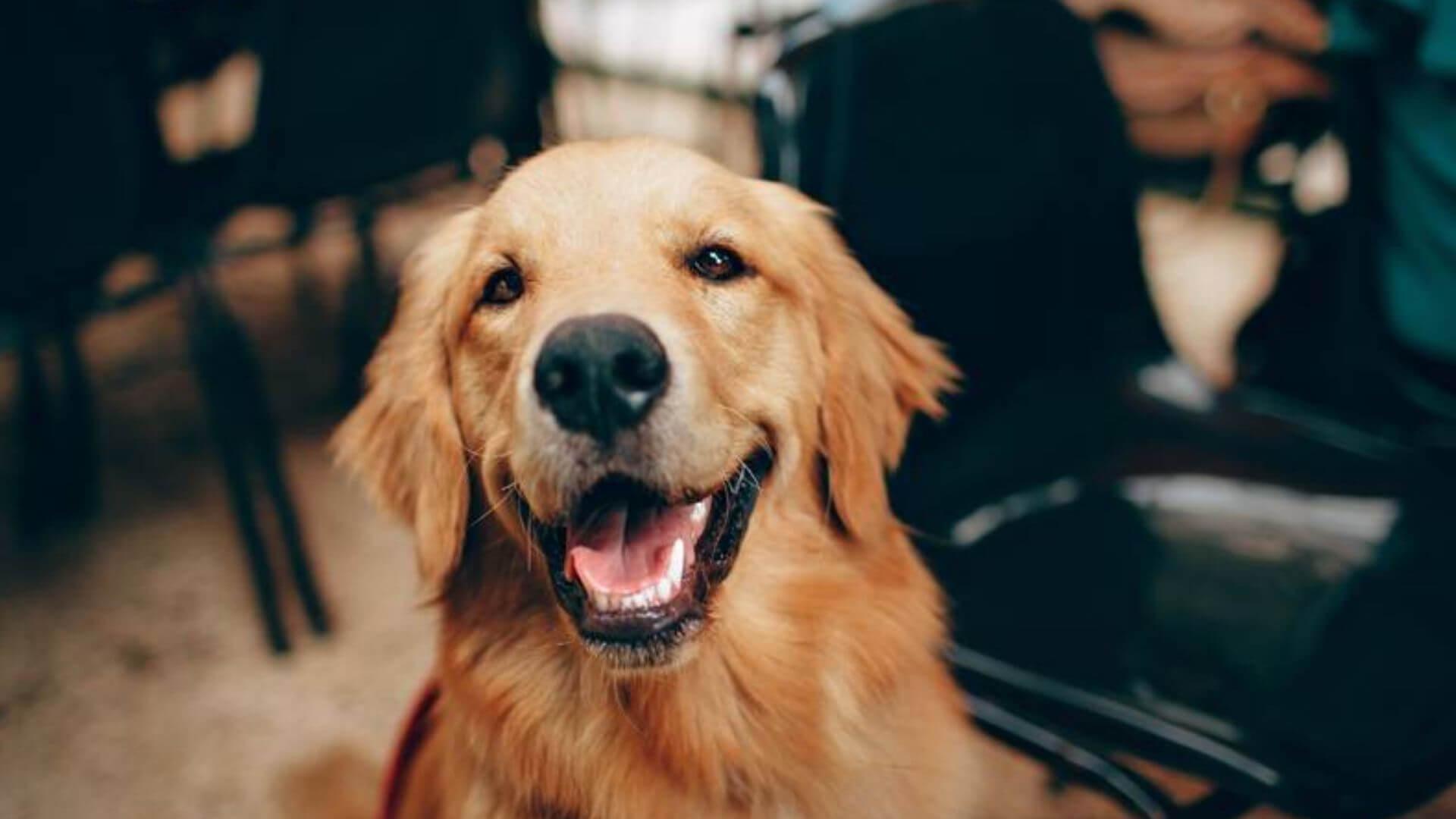 Come-capire-il-comportamento-del-cane