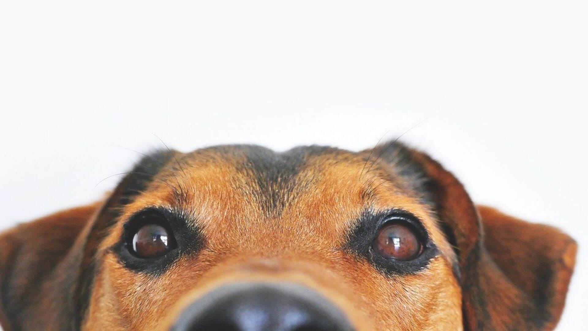 Gli-occhi-dei-cani