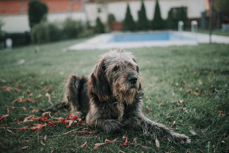 Il-cane-sta-diventando-anziano