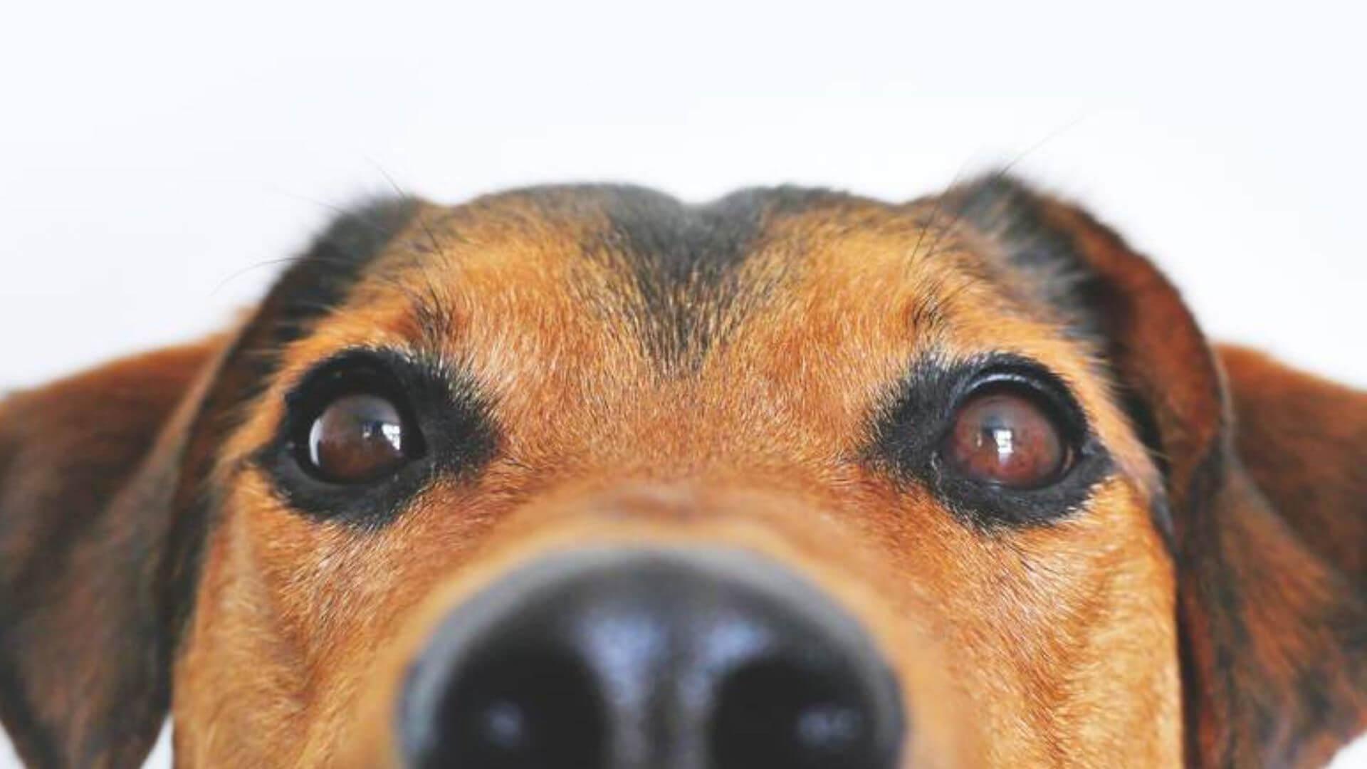 Perché-i-cani-si-annusano-il-sedere