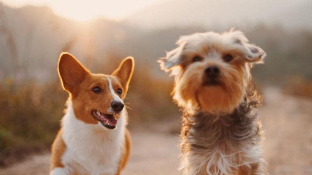 l'olfatto-del-cane