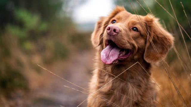 Età-media-di-un-cane