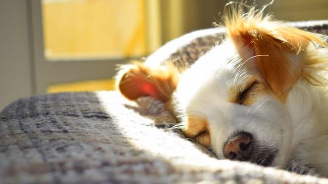 dorme-un-cane