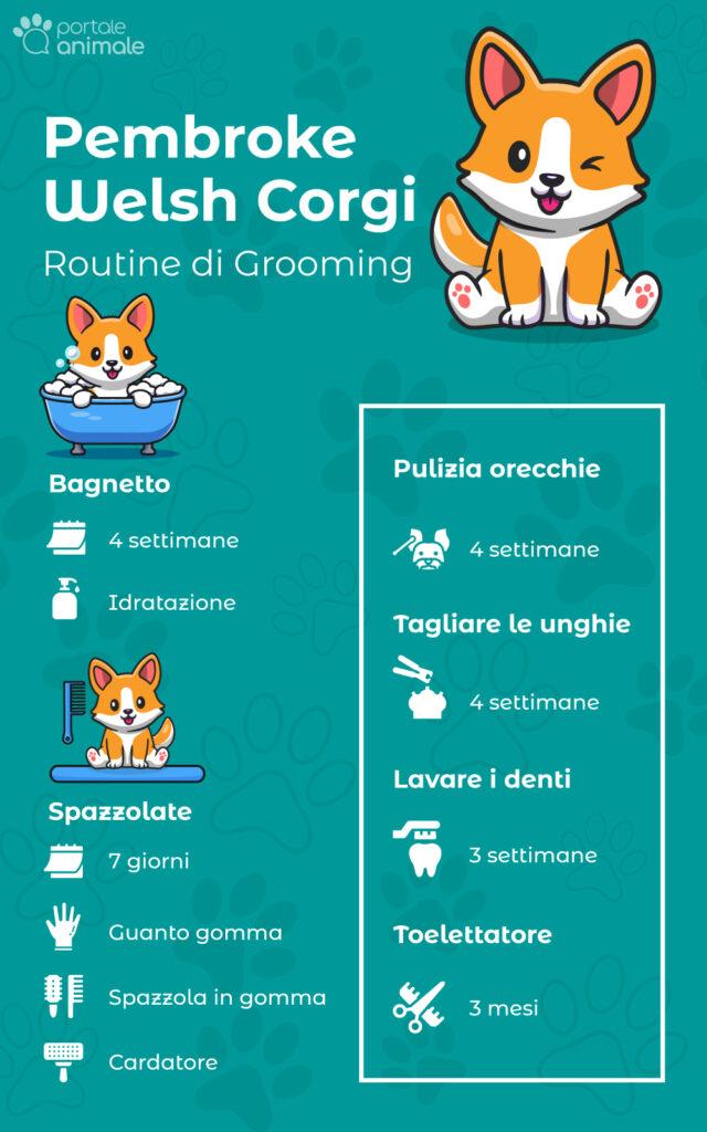 Routine di grooming corgi