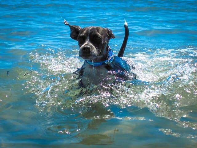 spiagge-per-cani-Friulia-Venezia-Giulia