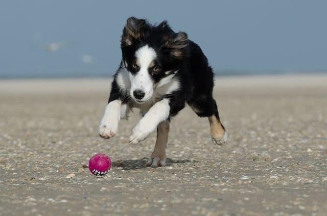 spiagge-per-cani-Sardegna