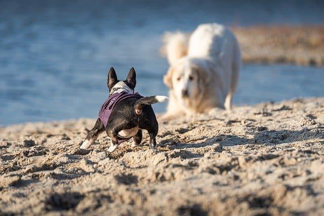 spiagge-per-cani-abruzzo