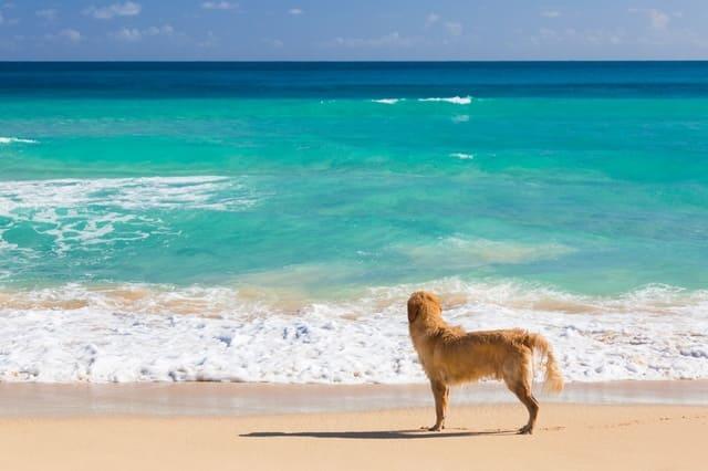spiagge-per-cani-calabria