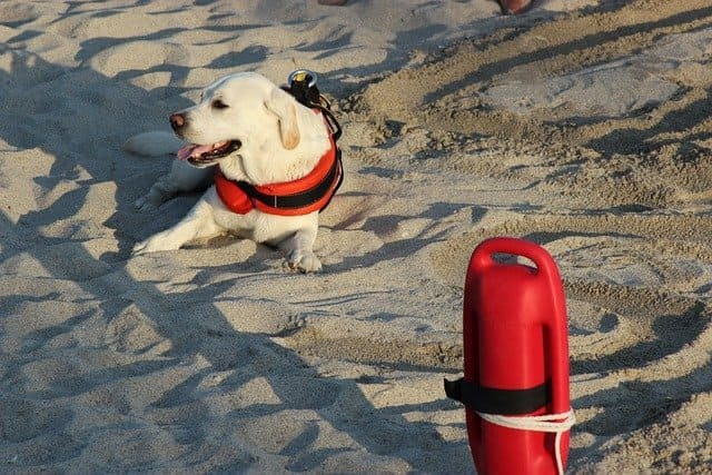 spiagge-per-cani-campania