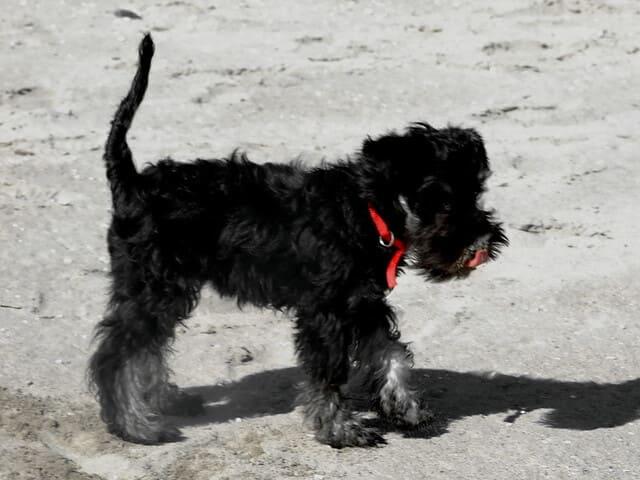 spiagge-per-cani-emilia-romagna