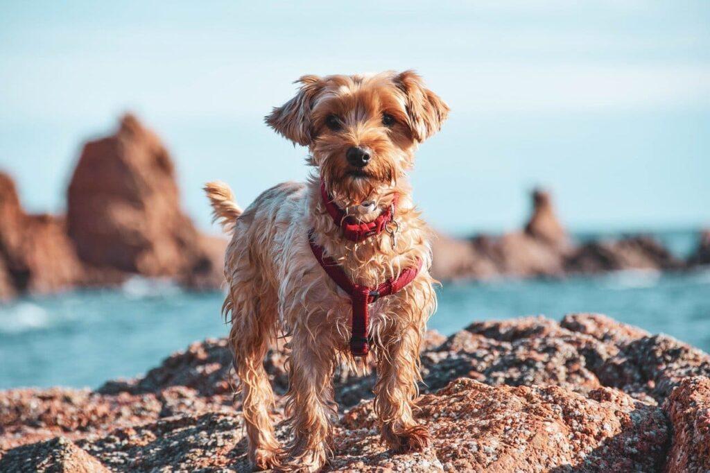 spiagge-per-cani-in-Italia
