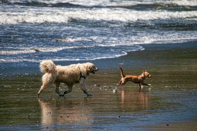 spiagge-per-cani-lazio
