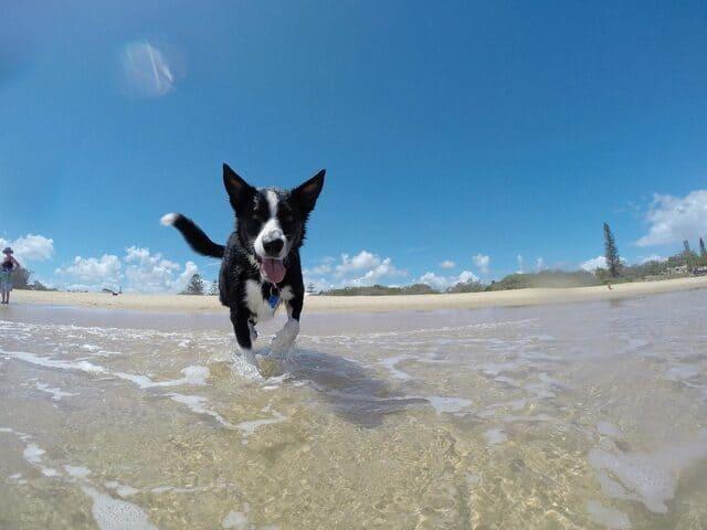 spiagge-per-cani-liguria