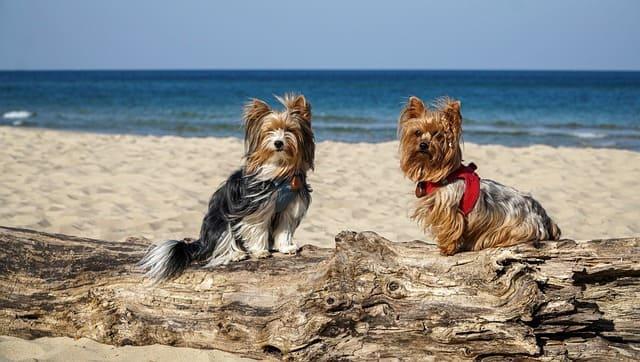 spiagge-per-cani-marche