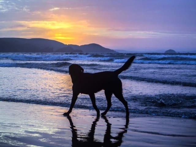 spiagge-per-cani-sicilia
